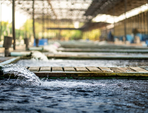 The Real Issues with Untreated Water